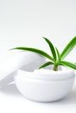 Natural cream royalty free stock image