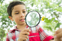 Natural curiosity Stock Photography