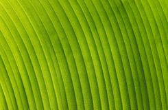 Natural Curve Texture Royalty Free Stock Image