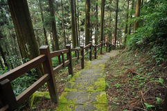 Natural damp steps downward in pine forest Stock Image