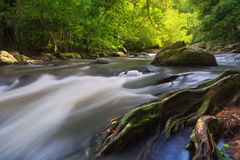 Natural deep forest waterfall Stock Photos