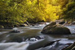 Natural deep forest waterfall Royalty Free Stock Photos