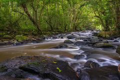 Natural deep forest waterfall Stock Image
