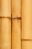 Natural detailed bamboo Stock Photography