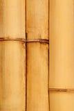 Natural detailed bamboo Stock Photography
