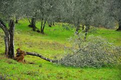 Natural disaster: broken trees  Stock Image