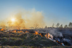 A natural disaster. Fire in nature Royalty Free Stock Images