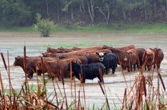 Natural disaster - Flood stock image