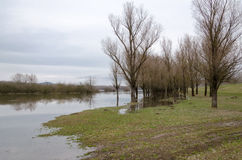 Natural disaster. Flooding of the Tisza river at Tiszalok, Hungary. Flooded forest Royalty Free Stock Photo