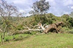 Natural disaster. Hurricane. Stock Image