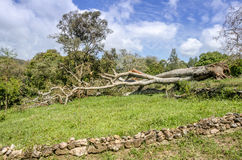 Natural disaster. Hurricane. Stock Photography