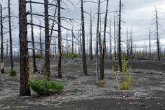 Free Natural Disaster On Kamchatka Peninsula: Burnt Tree In Dead Wood Dead Forest Royalty Free Stock Image - 103649636