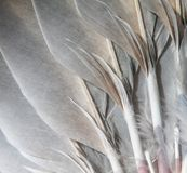 Natural feathers abstract Royalty Free Stock Photography