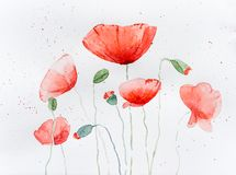 Natural drawing of poppy flowers royalty free stock image