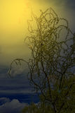 Natural drawing with tree branches in sunset light Royalty Free Stock Photo