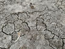Natural in dried cracked mud.Vintage. stock image