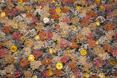 Natural Dried Flowers Background Royalty Free Stock Image