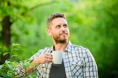 Natural drink. Healthy lifestyle. I prefer green tea. Refreshing drink. Man bearded tea farmer hold mug nature. Background. Green tea contains bioactive royalty free stock image