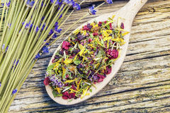 Natural dry herbal tea with meadow flowers near Stock Images