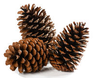 Natural dry pine cones. Stock Photos