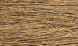 Natural dry reed background Stock Images