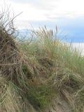 Natural dune grass Stock Photography