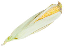Natural ear of ripe corn isolated on white Stock Image