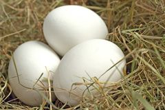 Natural easter decoration. White easter eggs in a nest Royalty Free Stock Photo