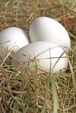 Natural easter decoration. White easter eggs in a nest Royalty Free Stock Image