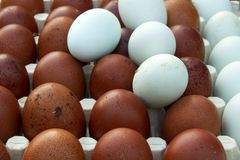 Natural ecological eggs of brown and blue color Stock Image