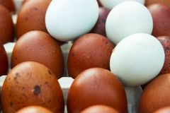 Natural ecological eggs of brown and blue color Stock Images