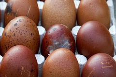 Natural ecological eggs of brown and blue color Stock Photos
