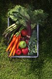 Natural ecological food. Vegetables straight from the garden. royalty free stock photos