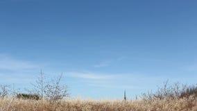 Natural Edge of Mountnain View CA Video stock video