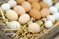 Natural eggs in nest Stock Photography