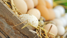Natural eggs in nest close up Stock Photo
