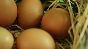 Natural eggs rotating in basket close up macro. Natural eggs rotating in basket stock video footage