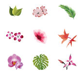 Natural elements Royalty Free Stock Images