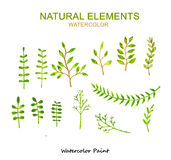Natural elements, Watercolor paint high resolution Royalty Free Stock Image