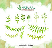 Natural elements, Watercolor paint high resolution Royalty Free Stock Photo