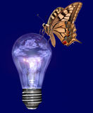 Natural energies 2. A colored butterfly rests on a lighted electric bulb with reflected flowers Royalty Free Stock Images