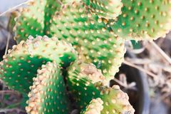 Natural environment, cactus flower stock image