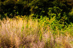 Natural Environment On Heights Royalty Free Stock Photography