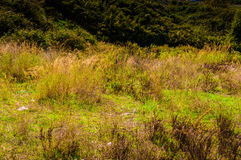 Natural Environment On Heights Royalty Free Stock Photos