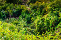 Natural Environment On Heights Royalty Free Stock Photo