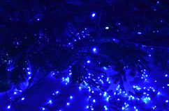 Christmas tree and blue led lights. Natural evergreen tree branches and blue led lights lit in the night. Winter holidays background royalty free stock photography