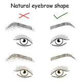 Natural eyebrow shape. Right and wrong brows Stock Photo