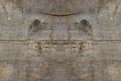 Natural face creature in old wood plank background Stock Photos