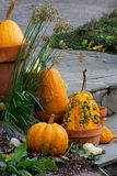 Natural fall decorations Royalty Free Stock Image