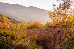 Natural Fall Landscape With Mountains Stock Image
